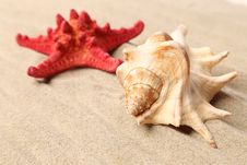 Free Red Starfish And Shell On Sandy Background Royalty Free Stock Photography - 32571307