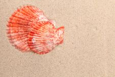 Free Red Shell On A Sandy Background. Royalty Free Stock Photo - 32571425