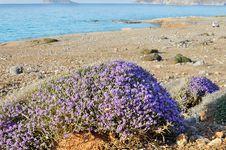 Free Seaside Of Creta Island Stock Photo - 32571450