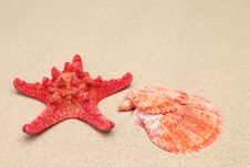 Free Red Starfish And Shell On Sandy Background Stock Photo - 32571520