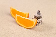 Free Orange And Shell On Sand. Royalty Free Stock Image - 32571736