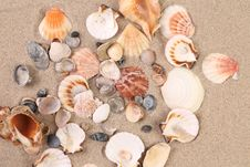 Free Sea Shells On Sand As Background Royalty Free Stock Photos - 32571798