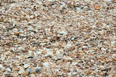 Free Sea Shells Royalty Free Stock Images - 32572439