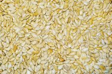 Pumpkin Seeds Stock Photos