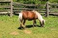 Free Pony Stock Image - 32580771