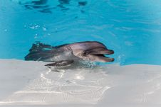 Free Dolphin Smiling From The Water Royalty Free Stock Photo - 32580515