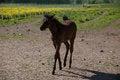 Free Foal Stock Image - 32599741