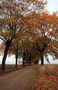 Free Autumn Road Royalty Free Stock Photography - 3260017