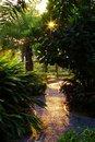 Free Sunrise Royalty Free Stock Photography - 3266597