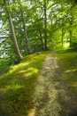 Free The Forest - Late Afternoon Royalty Free Stock Photography - 3268847