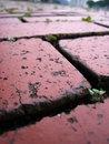 Free Brick Tiled Floor Royalty Free Stock Photos - 3269508