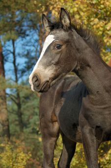 Free Foal In Fall Royalty Free Stock Photo - 3260075