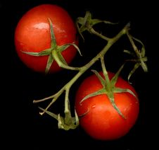Free Tomatoes Royalty Free Stock Photo - 3260945