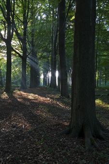 Free Sunlight In Autumn Stock Photography - 3263202