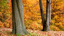 Free Autumn In A Park Stock Photos - 3263273