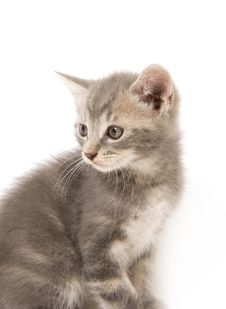 Free Gray Kitten Looking Back Royalty Free Stock Image - 3263666