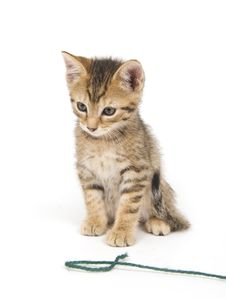 Free Tabby Kitten And Yarn Stock Photography - 3263672