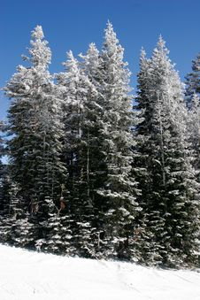 Free Fresh Snow In The Sierras Stock Image - 3263851