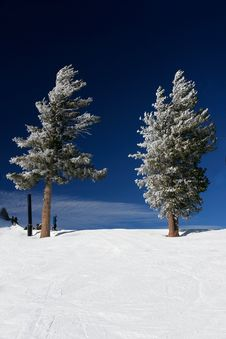 Free Fresh Snow In The Sierras Royalty Free Stock Photos - 3263918