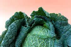 Free Fresh   Cabbage Royalty Free Stock Images - 3264819