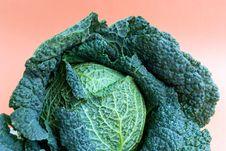 Free Fresh   Cabbage Stock Photo - 3264820