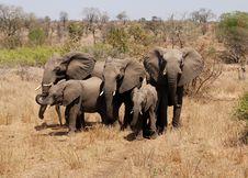 Free Elephant Family Stock Image - 3266141