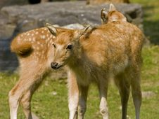 Free Bbaby Deer Stock Images - 3266324