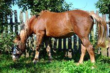 Free Horse Stock Photos - 3267143