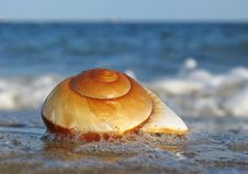 Free Shell On The Beach Stock Photo - 3267690