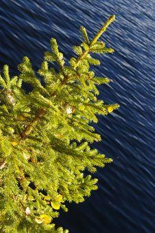 Free Tree Stock Photos - 3267833