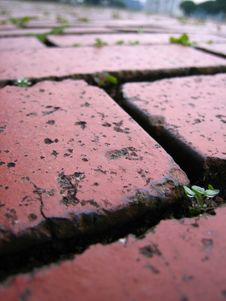 Free Brick Tiled Floor Royalty Free Stock Photos - 3269508