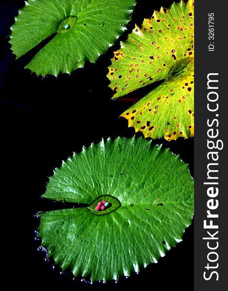 Unique Leaves Free Stock Images Photos 3261795 Stockfreeimages Com