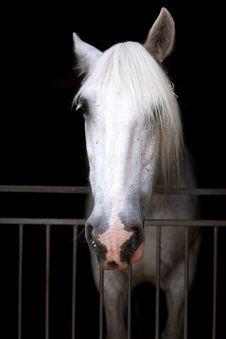 Free White Horse Stock Photo - 32600620