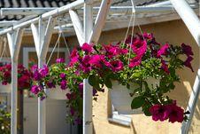 Beautiful Hanging Flowerpot Basket Royalty Free Stock Photos