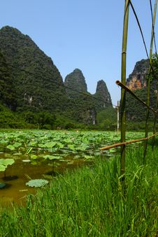 Free China Lotus Farm Stock Photos - 32648203