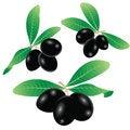 Free Black Olives Royalty Free Stock Photo - 32683255