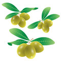 Free Set Of Olives Vector Royalty Free Stock Image - 32683326