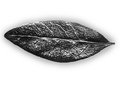 Free Black And White Leaf Royalty Free Stock Images - 32685599