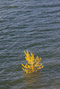 Free Flooded Tree In Swamp Royalty Free Stock Image - 32686966