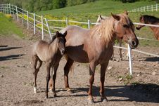 Free Horse With Foal Royalty Free Stock Photos - 32681808