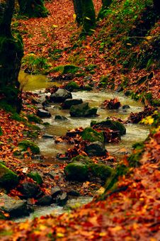 Free Leaves Autumn Stock Images - 32681874