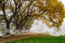 Autumn Trees In The Fog Stock Image