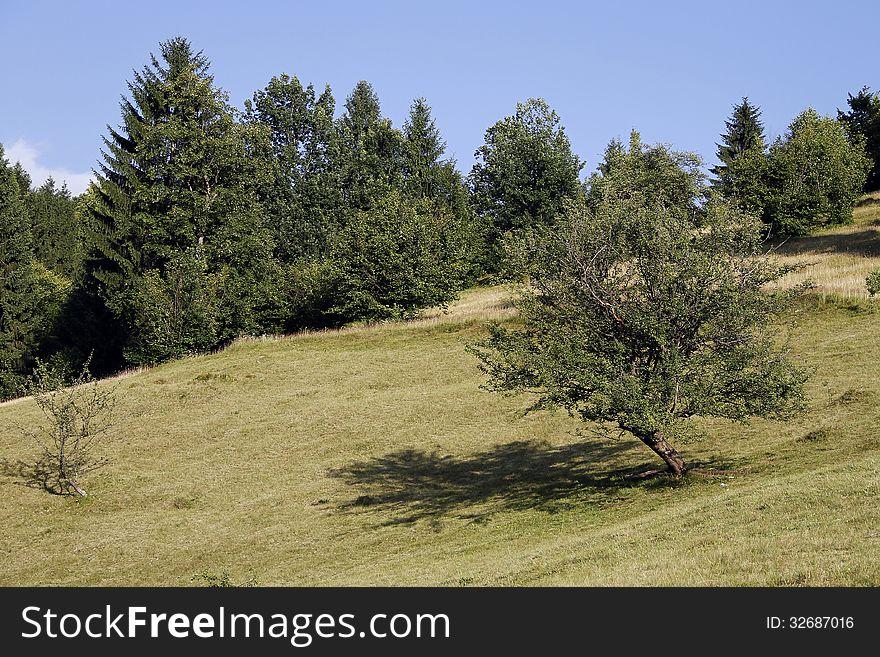 Alpine pasture near the forest