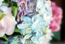 Free Colorful Flowers Stock Photos - 32691533