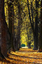 Free Autumn Alley Stock Images - 3274394