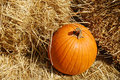 Free Pumpkin Time Royalty Free Stock Image - 3275986