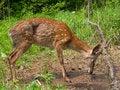 Free Deer In Net 14 Royalty Free Stock Image - 3279376