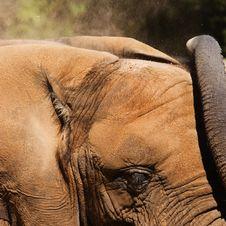 Free Elephant Dirt Bath Royalty Free Stock Image - 3270376