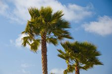 Free Palm Trees Stock Image - 3271041