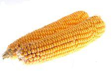 Free Corn Stock Photography - 3271452